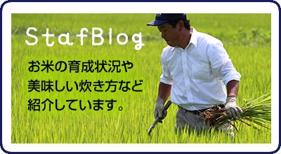 StaffBlog お米の育成状況や美味しい炊き方