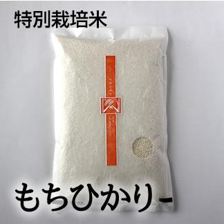 特別栽培米 もちひかり