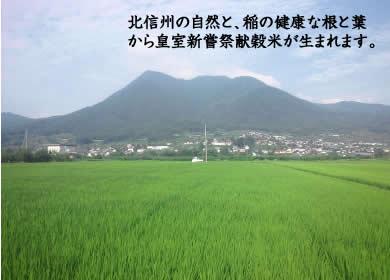 北信州の自然と、稲の健康な根と葉から皇室新嘗祭献穀米が生まれます。