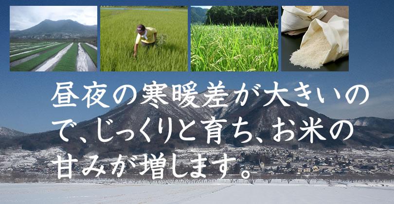昼夜の寒暖差が大きいので、じっくりと育ち、お米の甘みが増します。