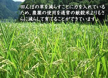 田んぼの草を減らすことに力を入れているため、農薬の使用を通常の献穀米よりもさらに減らして育てることができています。
