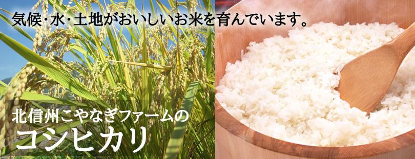 気候・水・土地がおいしいお米を育んでいます。こやなぎファームのコシヒカリ