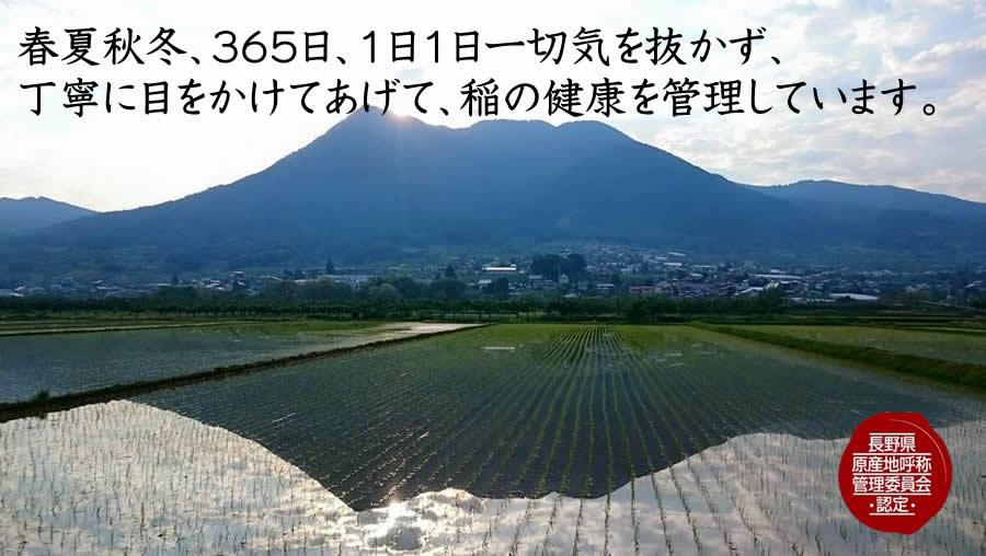 春夏秋冬、365日、1日1日一切気を抜かず、 丁寧に目をかけてあげて、稲の健康を管理しています。