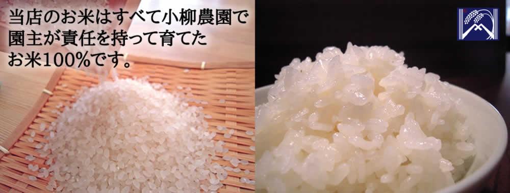 当店のお米はすべて小柳農園で園主が責任を持って育てたお米100%です。